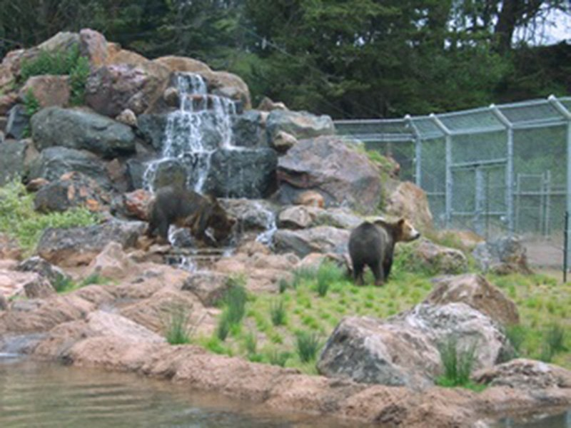 GrizzlyGulchSF-Zoo011